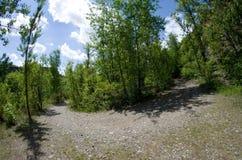 Sommer Straße in einem grünen Wald - fisheye Blick wandernd Lizenzfreie Stockfotografie