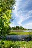 Sommer-Sumpf-Szene Stockbilder