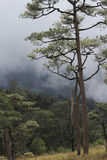 Sommer Sunny Forest Trees And Green Grass nave Lizenzfreies Stockbild