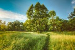 Sommer Sunny Forest Trees And Green Grass nave Lizenzfreie Stockbilder