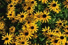 Sommer-Szene, frische gelbe Blumen Stockfotos