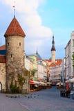 Sommer Tallinn. Stockbild