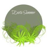 Sommer-tropische Anlagen und Hibiscus-Blumen im runden Rahmen lizenzfreie abbildung