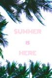 Sommer tyoigraphy mit Palmen Stockbilder