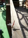 Sommer und die Libelle im Garten stockfotos