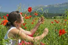 Sommer und Mohnblumen Stockbild