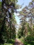 Sommer-Wald mit Weg-Weg lizenzfreie stockfotos