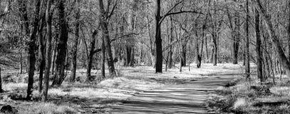 Sommer-Weg drapped in den Schatten Stockfotos