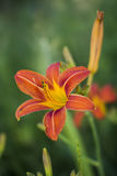 Sommer Wildflowers durch ZVEREVA Stockfotos