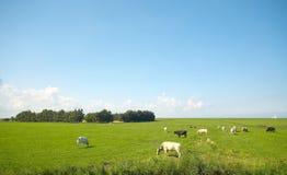 Sommerackerland stockbilder