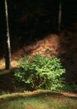 Sommeranschlag im Holz Stockfotos