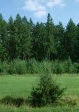 Sommeranschlag im Holz Stockbild
