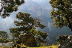 Sommerbäume Stockfoto