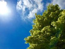 Sommerbäume Lizenzfreie Stockfotos