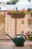 Sommerbalkon, der mit Petunienblumen im Garten arbeitet lizenzfreie stockbilder