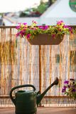 Sommerbalkon, der mit Petunienblumen im Garten arbeitet lizenzfreies stockbild