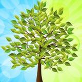 Sommerbaum blau und grün Lizenzfreie Stockbilder