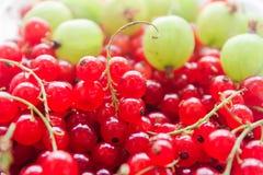 Sommerbeeren Vitamine Stachelbeere und Moosbeere lizenzfreie stockfotografie