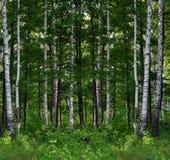 Sommerbirken-Waldlandschaft Lizenzfreie Stockfotos