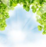 Sommerblätter auf Grünhintergrund Stockfotografie