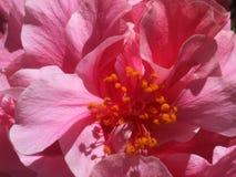 Sommerblüte stockbilder
