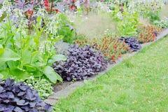 Sommerblüte im Garten Lizenzfreies Stockbild