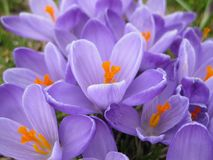 Sommerblüte im Garten Stockfotografie