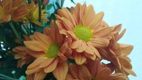 Sommerblüte im Garten Lizenzfreies Stockfoto