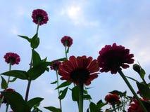 Sommerblüte im Garten Stockbilder