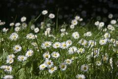 Sommerblüte im Garten Stockfoto