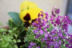 Sommerblüte im Garten Lizenzfreie Stockbilder