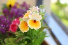 Sommerblüte im Garten Stockbild