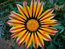 Sommerblüte im Garten Lizenzfreie Stockfotografie