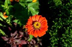 Sommerblüte im Garten Im Stadtpark blüht natürliches Stockfoto