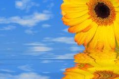 Sommerblume Lizenzfreies Stockbild