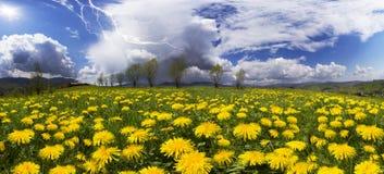 Sommerblumelöwenzahn und -blitz Stockfotografie