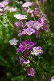 Sommerblumen. Lizenzfreie Stockfotografie