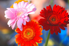 Sommerblumen Lizenzfreie Stockbilder