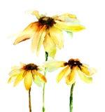 Sommerblumen Lizenzfreies Stockbild