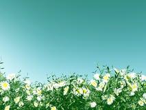 Sommerblumen Lizenzfreies Stockfoto