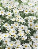 Sommerblumen Lizenzfreie Stockfotografie