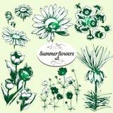 Sommerblumen eingestellt Lizenzfreie Stockbilder