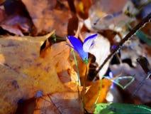 Sommerblumen im Herbst lizenzfreie stockbilder