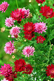 Sommerblumenbeet Lizenzfreie Stockfotografie
