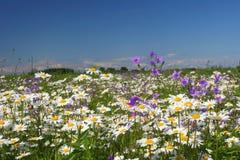 Sommerblumenfeld stockbild