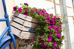 Sommerblumenkasten und -fahrrad Stockfotografie