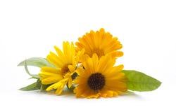 Sommerblumenstrauß der Krautnahaufnahme stockbilder