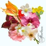 Sommerblumenstraußtulpen-Anemonennarzisse Stockfotos