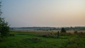Sommerdämmerung mit Nebel, Gras und Bäumen stock video footage
