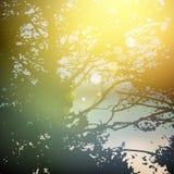 Sommerdesign, Bäume des Waldes, natürlicher grüner Hintergrund des grünen hölzernen Sonnenlichts der Natur Vektor Stockbild